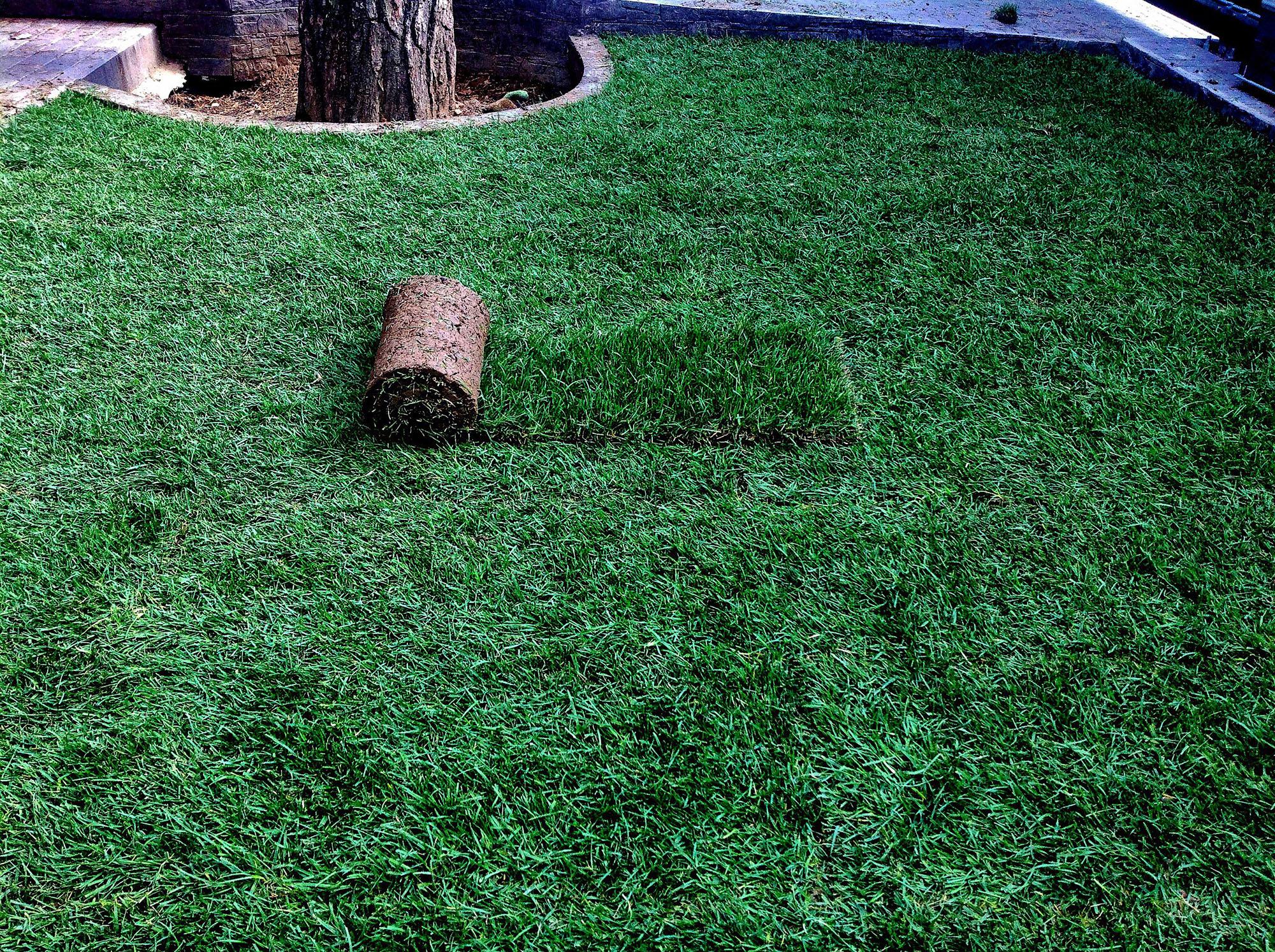 как правильно укладывать рулонный газон